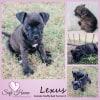 Photo of Lexus **Adoption Pending**
