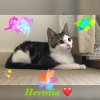 Photo of Hermia