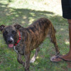 Photo of Wednesday   Cd0291*Adoption Pending