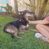 Photo of Rosie Dl1802