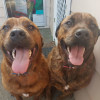 Photo of Sasha And Jd
