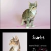 Photo of Scarlet