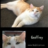 Photo of Geoffrey