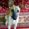 Photo of Buggy