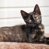Photo of Trish **2nd Chance Cat Rescue**