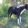 Photo of Tahnee