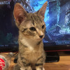 Photo of Mater The Masterful Energetic Kitten!
