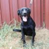 Photo of Tessie