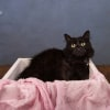 Photo of Blackie Ec0395