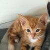 Photo of Barni **2nd Chance Cat Rescue**