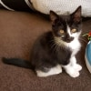 Photo of Orion **2nd Chance Cat Rescue**