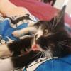 Photo of James Bond Aka Jb The Dapper Kitten!