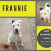 Photo of Frannie