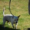 Photo of Chihuahua Boy