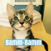 Photo of Bamm Bamm