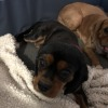 Photo of Tilly And Meg (Listed Separately) Bonded Pair
