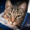 Photo of Binky