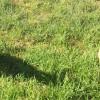 Photo of Hayley's Pups