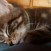 Photo of Dancer **2nd Chance Cat Rescue**