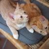 Photo of Tigger & Shmoo