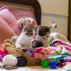 Photo of Benny ~ Kitten
