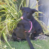Photo of Puppy George Dl1827