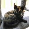 Photo of Dalida **2nd Chance Cat Rescue**