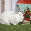 Photo of Snowy & Chip