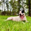 Photo of Haribo