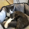 Photo of Amethyst **2nd Chance Cat Rescue**
