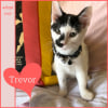 Photo of Trevor ~ Kitten