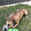 Photo of Chubb