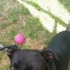 Photo of Patty  (Private Re Homing)