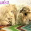 Photo of Squeaks