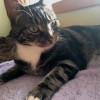 Photo of Harper **2nd Chance Cat Rescue**