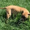 Photo of Rex (Hayley's Pup)
