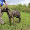 Photo of Sampson
