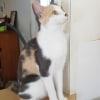 Photo of Deena