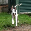 Photo of Kylo