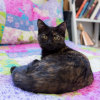 Photo of Opal ~ Kitten (On Trial 7/4/2018)