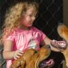 Photo of Bentley ~ 13 Month Old Mastiff X Rottweiler