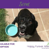 Photo of Scout