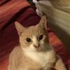 Photo of Archer