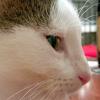 Photo of Barbara The Cheeky But Sweet Girl Kitten!