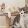 Photo of Apollo ~ Kitten (On Trial 6 4 2018)