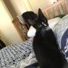 Photo of Togi