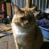 Photo of Chubby