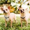 Photo of Pablo & Vito