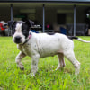 Photo of Matilda (Adoption Pending)