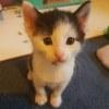 Photo of Clonk